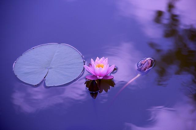 Cos'è E Come Iniziare A Meditare